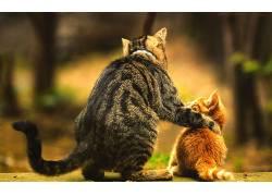 宝宝,猫,模糊,爱,动物,小猫359541