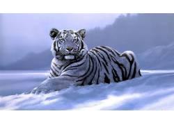 动物,虎,艺术品,白老虎195780