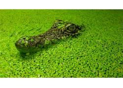 动物,鳄鱼,植物,爬行动物180384