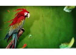 抽象,动物,鸟类,金刚鹦鹉,羽毛,绿色背景113646