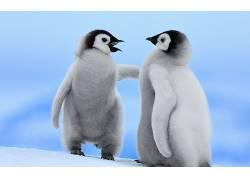 动物,鸟类,企鹅,小动物146393