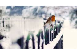 动物,鸟类,冬季,雪,罗宾斯59549