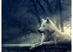 动物,狼,树木,植物355322