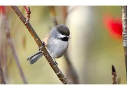 动物,鸟类,山雀288549