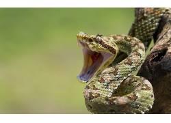 动物,蛇,性质,爬行动物211923