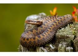 动物,蛇,性质,爬行动物211925