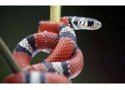 动物,蛇,性质,爬行动物211927