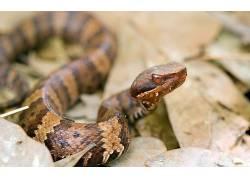 动物,蛇,性质,爬行动物211928