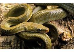 动物,蛇,性质,爬行动物211930