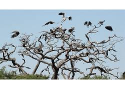 动物,鸟类,性质,飞行,秃鹰141219