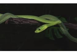 动物,蛇,性质,爬行动物211931