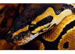 动物,蛇,性质,爬行动物211932