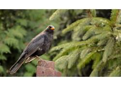 动物,鸟类,性质360855