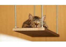 波动,猫,动物138988