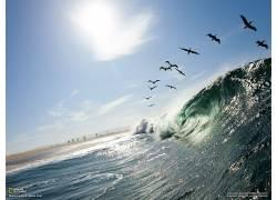 波浪,鸟类,国家地理,动物,海,性质113979