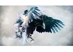 动物,鸟类,数字艺术,艺术品,鹰(动物)9085