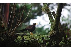 动物,鸟类,景深,科300138