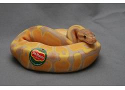 动物,蛇,爬行动物,贴纸,香蕉,幽默364926