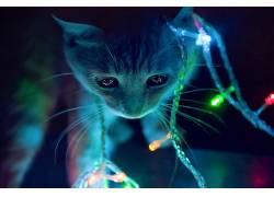 灯火,小猫,动物,圣诞248104