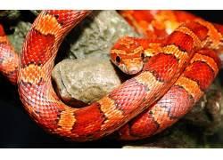 动物,蛇,爬行动物180357