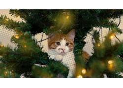 灯火,猫,眼睛,望着远处,动物,树木119193