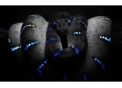 动物,蛇,选择性着色,蟒蛇102806