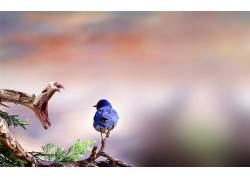动物,蛇,鸟类,野生动物,爬行动物218299