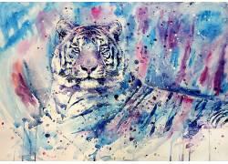 白老虎,虎,艺术品,绘画,水彩,蓝色,紫色,动物176854