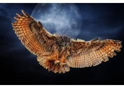 动物,猫头鹰,HDR,鸟类195557