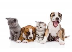 白色背景,动物,狗,猫,小动物97005