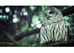 动物,鸟类,猫头鹰,科134475