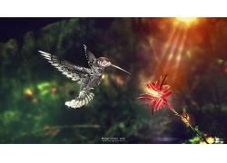 动物,蜂鸟,数字艺术,花卉,阳光,鸟类134514