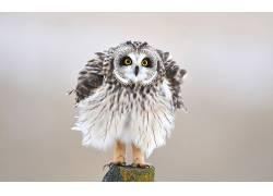 动物,鸟类,猫头鹰136668