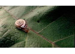 动物,蜗牛,宏,树叶134509