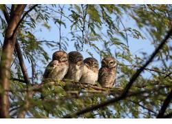 动物,猫头鹰,树木,鸟类194333