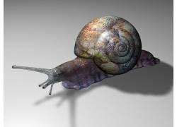 动物,蜗牛195562