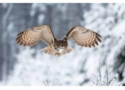 动物,鸟类,猫头鹰366191