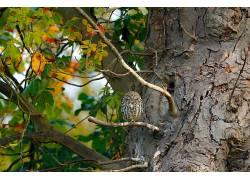 动物,猫头鹰,树木194335