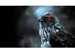翅膀,动物,鸟类,红眼睛,数字艺术14144