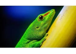 动物,蜥蜴,爬行动物,宏,特写,华美8445