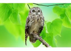 动物,猫头鹰,鸟类,树叶229587