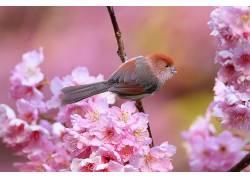 动物,鸟类,粉色的花朵,花卉350520