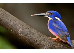 动物,鸟类,翠鸟124147