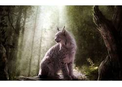 动物,猞猁,幻想艺术262500