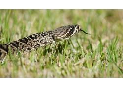 草,爬行动物,蛇,动物94034