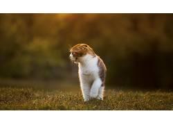 草,猫,动物137318