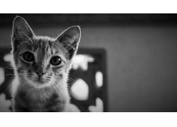 动物,猫,单色221435