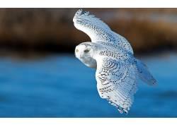 动物,猫头鹰,鸟类190258