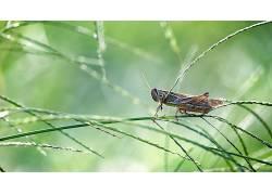 草,蚱蜢,动物285814
