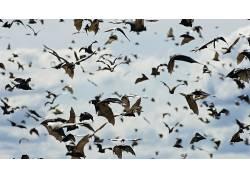 蝙蝠,天空,动物,景深238504